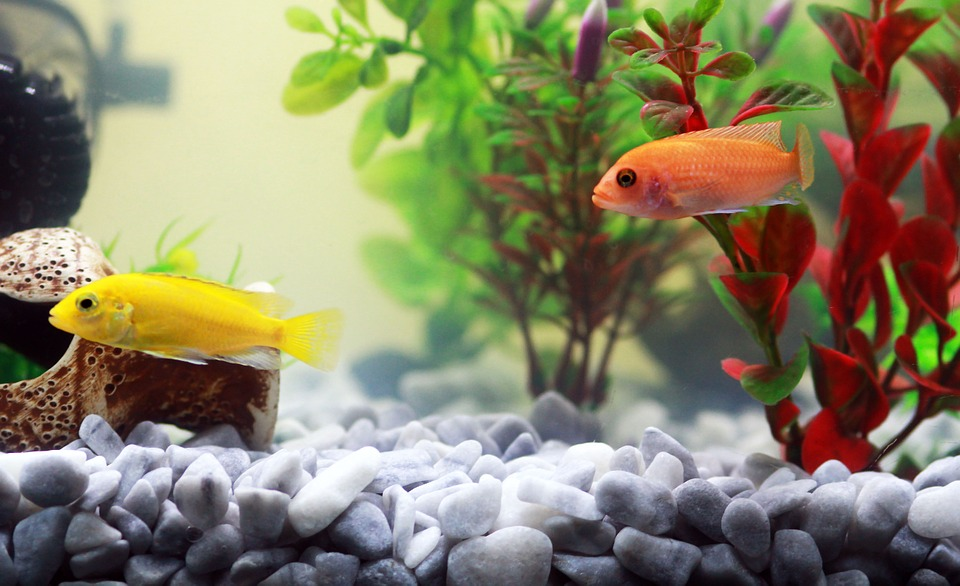 Décoration aquarium