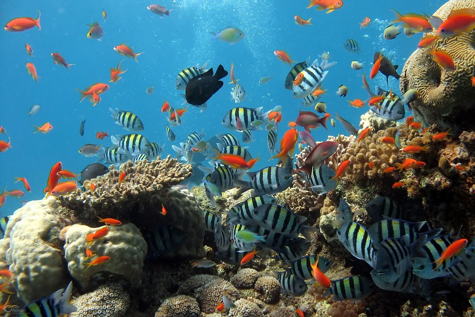 Décorer son aquarium